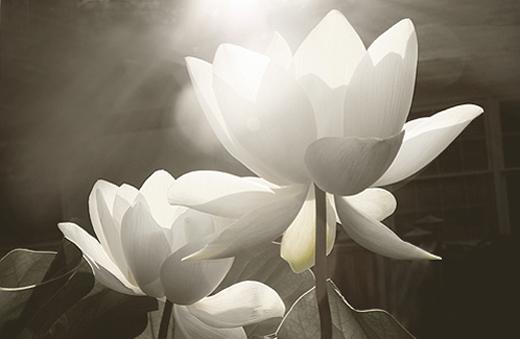 white flower light